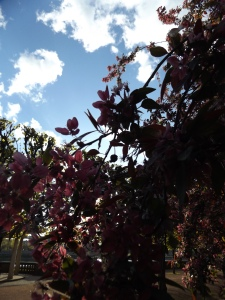 Baumblüte 594